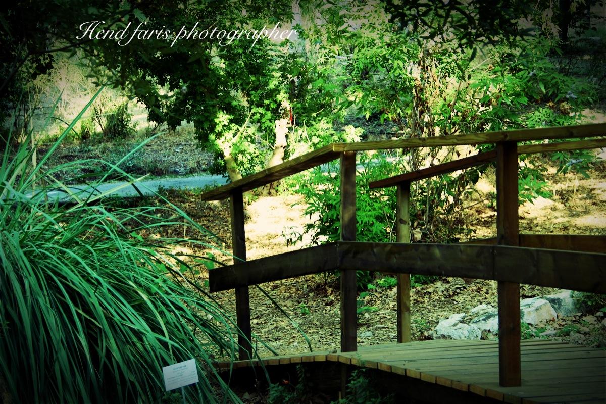 הגן הבוטני. צילום: פארס הנד